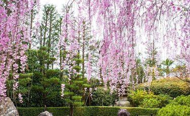 Piękny ogród - inspiracje